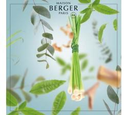 cytronela-olejek-zapachowy-maison-berger