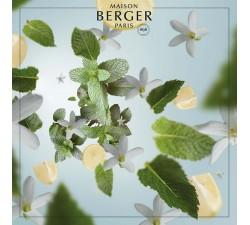 Mięta-z-Riadu-olejek-zapachowy-Maison-Berger-2
