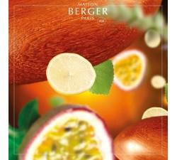 Palisander-olejek-zapachowy-maison-berger-2