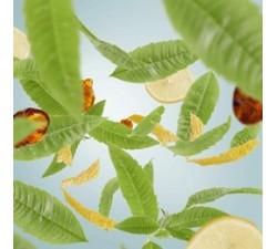 Skórka-cytrusowa-olejek-zapachowy-1000-ml-Maison-Berger-2