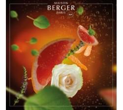 Szampan-olejek-zapachowy-maison-berger-2