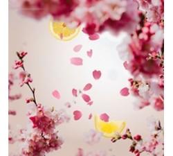 Kwiat-Wiśni-olejek-zapachowy-maison-berger-2